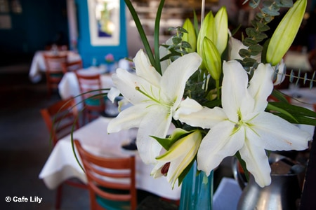 Cafe Lily