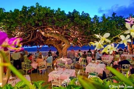 Hau Tree Lanai, Honolulu, HI