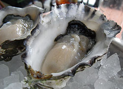 Oysters are the classic aphrodisiac