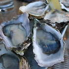 Eat something sexy like oysters on February 14 at one of the restaurants featuring special menus that day!