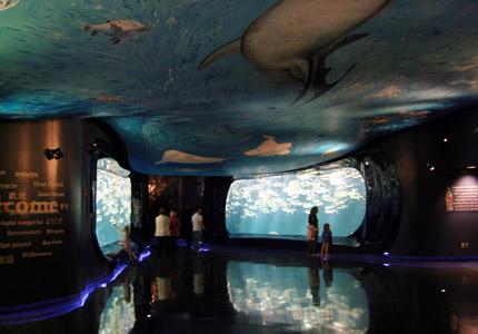 The fish tanks at the Georgia Aquarium