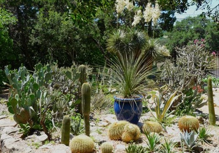 The Cactus and Succulent Garden at the Zilker Botanical Gardens