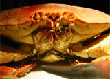 The annual Andros Crabfest showcases over 100 ways to capture, prepare and eat the beloved shellfish