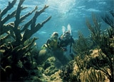Scuba diving in Nassau in the The Bahamas