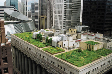 Chicago's City Hall is home to a rooftop garden