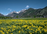 Rocky Mountains National Park, one of our Top 10 U.S. National Parks