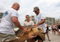 Sea Turtle Rehabilitation through the Marine Science Center