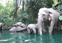 Disney's Jungle Cruise is fun for kids and adults alike