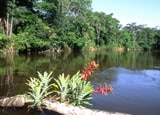 View of the river in the Amazon region of Ecuador