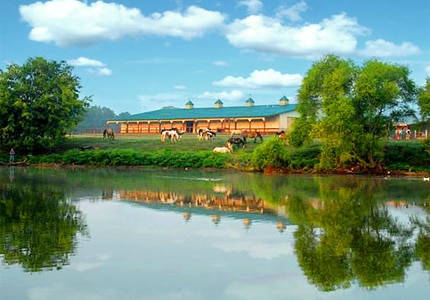 Enjoy horseback riding at the Southern Cross Guest Ranch in Madison, Georgia
