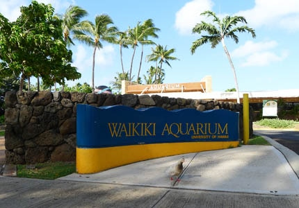 The Waikiki Aquarium has exhibits of vibrant corals and sea life