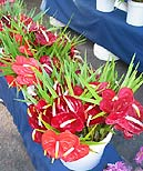 You'll find Anthuriums at Oahu's farmers markets