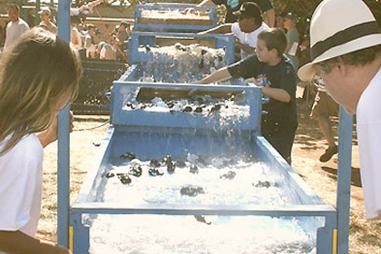 Fun and games at the Maui Whale Festival