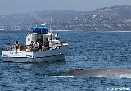 Go whale watching at Dana Wharf in Laguna Beach, California