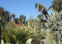 Desert Garden at Huntington Library, Art Collections, and Gardens