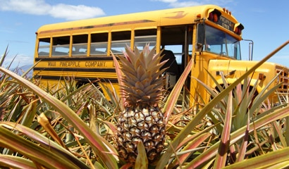 Maui Pineapple Company's field