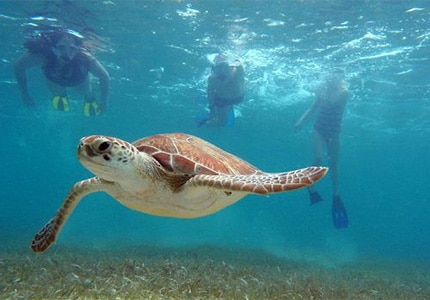 Swim with the turtles during your stay on the Rivera Maya
