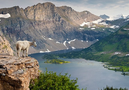 Glacier National Park in Montana is treasured for its dramatic views and diverse wildlife