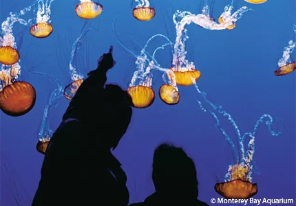 See aquatic life at the Monterey Bay Aquarium