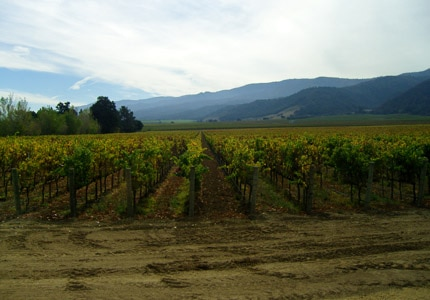 Take a tour of one of the vineyards and wineries in Monterey, California
