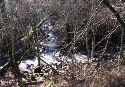 A creek in Bale Grist Mill State Historic Park in St. Helena, California