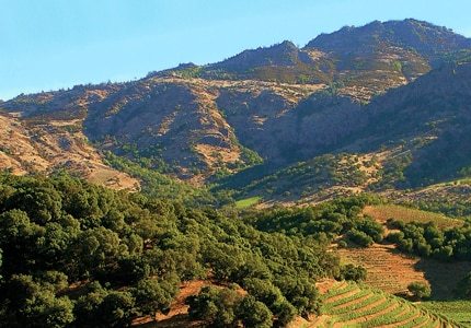 Discover new wines and the lush vineyards of Napa Valley, CA