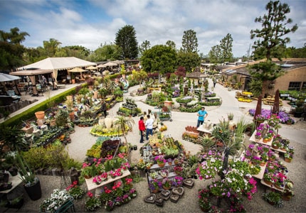 The outdoor gardens at Roger's Garden in Newport Beach, California have a selection of colorful plants