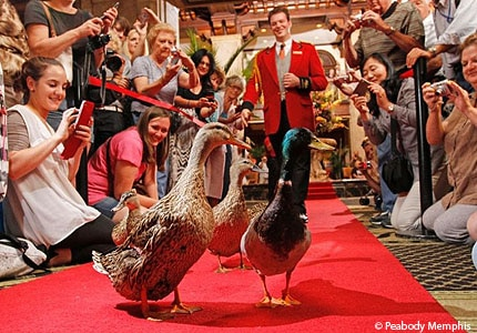 The duckmaster at The Peabody Memphis in Tennessee maintains a hotel tradition