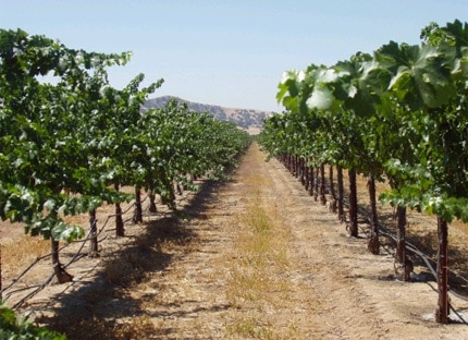 Pianetta Vineyards near Paso Robles, California