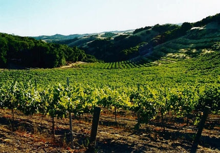 The vineyard at Villicana Winery in paso Robles, California