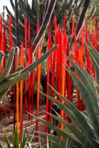 The Desert Botanical Garden in Phoenix is home to 150 rare plant species from around the world