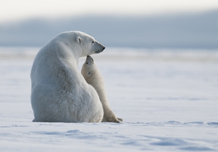"""The Grand Prize Winner of the """"Share the Experience"""" 2014 contest - Arctic National Wildlife Refuge"""