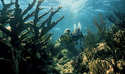 Scuba diving in Nassau in the Bahamas, one of our Top Romantic Destinations Worldwide