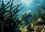 Scuba diving in Nassau in the Bahamas, one of GAYOT's Top Romantic Destinations Worldwide