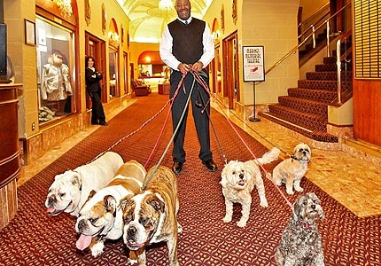 Marines' Memorial Club & Hotel is one of GAYOT's Top 10 Pet-Friendly Hotels in San Francisco