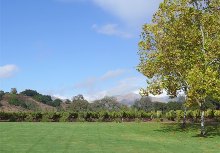 Single vineyard wines are produced at Fess Parker Winery & Vineyards in Santa Barbara County, CA