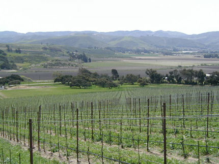 Visit wineries in the Santa Barbara Wine Country