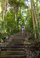 Steps to the Bukit Timah Nature Reserve in Singapore