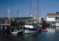 Fishing boats at Bodega Bay Harbor
