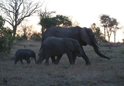 An elephant family in South Africa