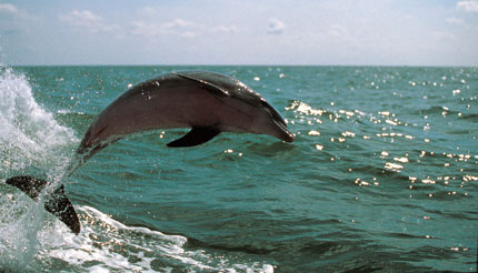 Dolphin watching in Tampa Bay, Florida
