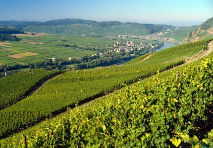 The German Wine Routh in Pfalz, Germany, one of GAYOT's Top 10 Wine Routes Worldwide