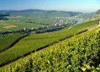 The German Wine Route through the Pfalz is one of the oldest wine roads in the world