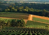 Erath Vineyards in Willamette Valley, Oregon
