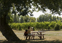 Try a number of delicious wines at the Tyee Wine Cellars