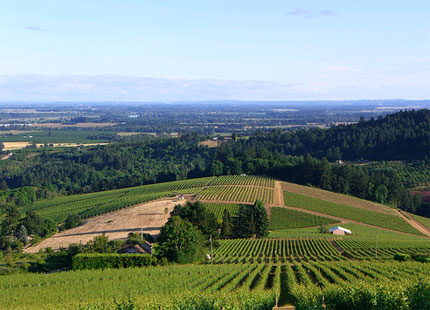 An aerial view of Willamette Valley, also known as Oregon Wine Country