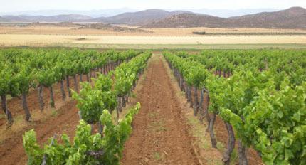 Tres Valles winery in Baja California, Mexico