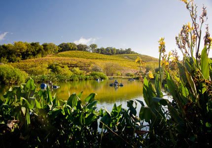 Recycling ponds at Benziger Family Winery