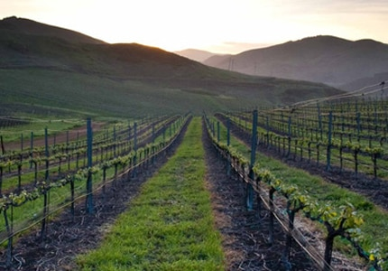 Laetitia Vineyards in Arroyo Grande Valley offers sustainably produced wines