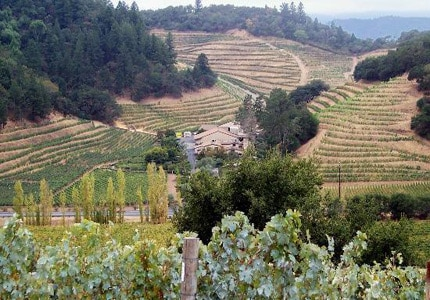 Pine Ridge Winery in Napa Valley planted their first vineyard on a steeply terraced hillside